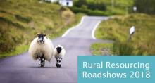 Sheep running along a country road in rural Scotland